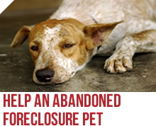 Abandoned Foreclosure Pets