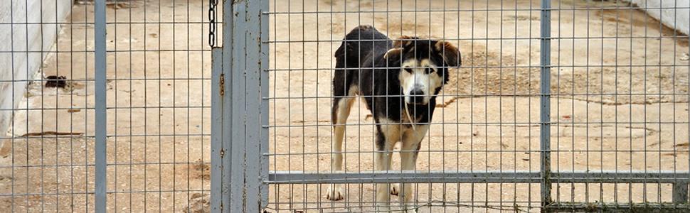 Mascotas Abandonadas