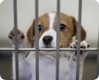 abandoned foreclosure pet