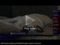 Disabled pets sanctuary faces closure