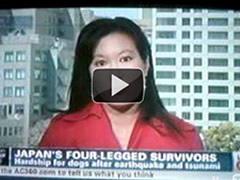 JAPAN'S FOUR-LEGGED SURVIVORS